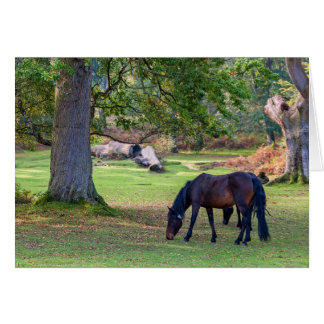 Beautiful New Forest Pony - Greeting Card