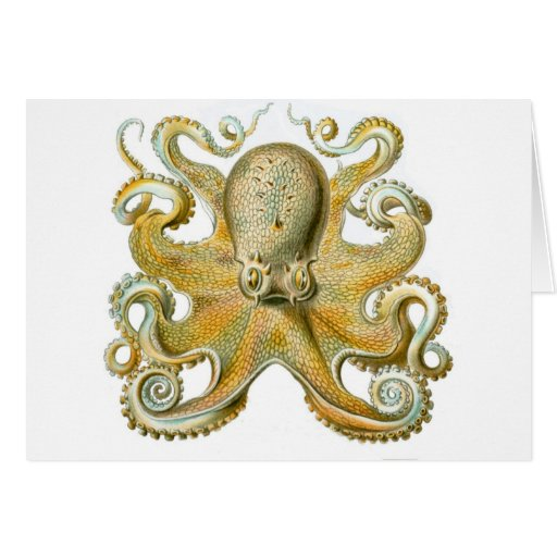Beautiful octopus picture by Haeckel Greeting Card