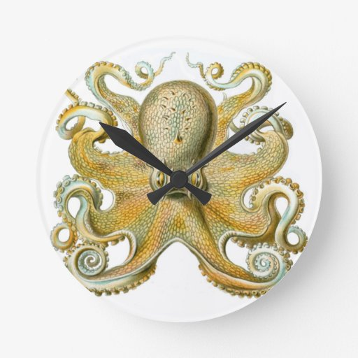 Beautiful octopus picture by Haeckel Clock