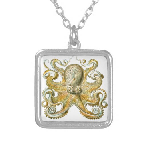 Beautiful octopus picture by Haeckel Custom Jewelry