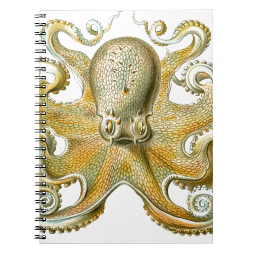 Beautiful octopus picture by Haeckel Spiral Notebooks