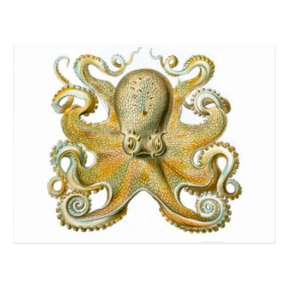 Beautiful octopus picture by Haeckel Postcard