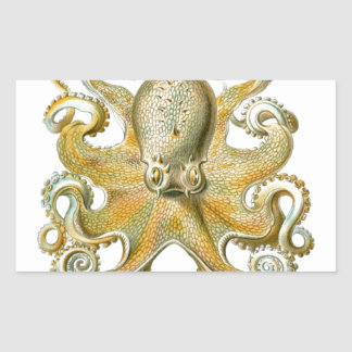 Beautiful octopus picture by Haeckel Rectangular Sticker