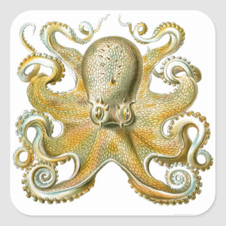 Beautiful octopus picture by Haeckel Square Sticker