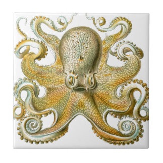 Beautiful octopus picture by Haeckel Tile