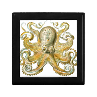 Beautiful octopus picture by Haeckel Trinket Box