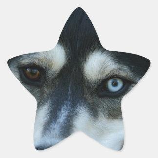 Beautiful One Blue Eye Siberian Husky Star Stickers