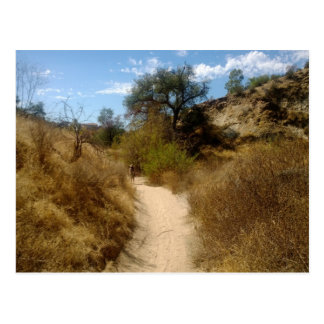Beautiful Open Hiking Trail in the Dry Brush Postcard