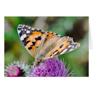 Beautiful Orange and Black Butterfly Card