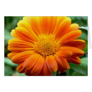 Beautiful Orange and Yellow Flower Note Card