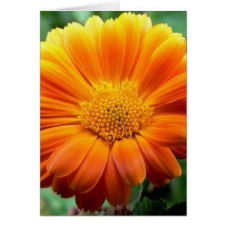 Beautiful Orange and Yellow Flower Greeting Card
