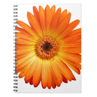 Beautiful Orange and Yellow Gerbera Daisy Spiral Notebook
