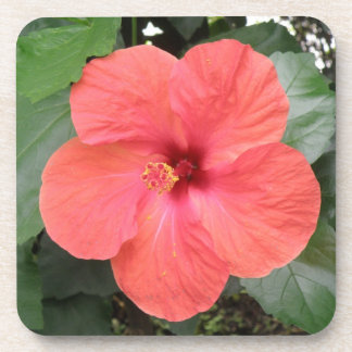 Beautiful Orange Hibiscus Flower Cork Coaster