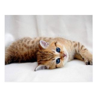 Beautiful orange tabby kitten with blue eyes postcard