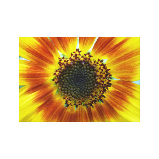 Beautiful orange-yellow sunflower stretched canvas prints