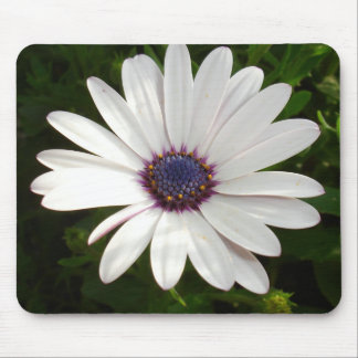 Beautiful Osteospermum White Daisy Mouse Pad