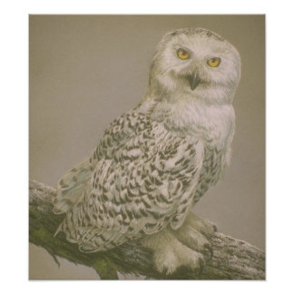 Beautiful Owl Art Poster Photo