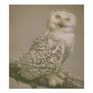 Beautiful Owl Art Poster Photographic Print