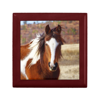 Beautiful Paint Horse Gift Box
