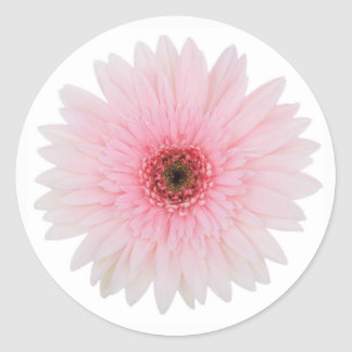 Beautiful Pale Pink Gerbera Daisy Flower Classic Round Sticker