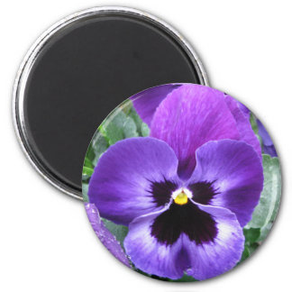 Beautiful Pansy Magnet