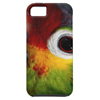 Beautiful Parrot iPhone 5 Covers