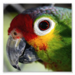 Beautiful Parrot Photographic Print