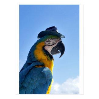 Beautiful Parrot Wearing a Hat Postcard