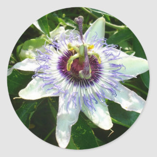 Beautiful Passion Flower With Garden Background Stickers