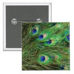 Beautiful Peacock 15 Cm Square Badge