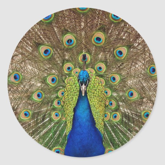 Beautiful peacock and tail feathers print classic round