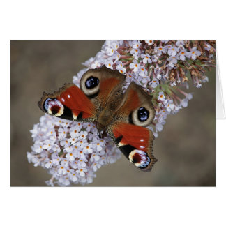 Beautiful Peacock Butterfly photo greeting card