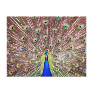Beautiful peacock canvas print