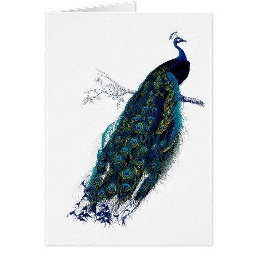 Beautiful Peacock Greeting Cards
