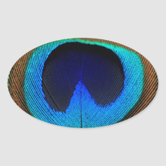 Beautiful peacock feather oval sticker