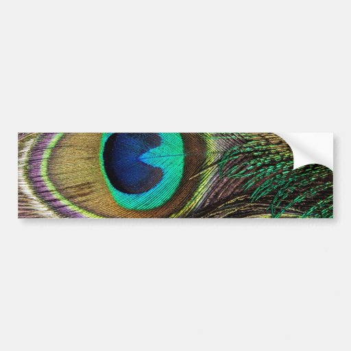 Beautiful Peacock Feathers Bumper Stickers