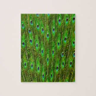 Beautiful Peacock Feathers Jigsaw Puzzle
