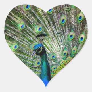 Beautiful Peacock Heart Sticker