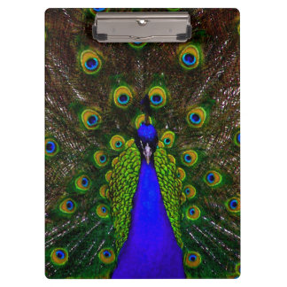 Beautiful Peacock Impressionist Picture Blue Clipboard