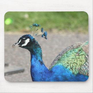 Beautiful Peacock Mousepad