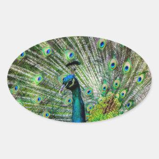 Beautiful Peacock Oval Sticker