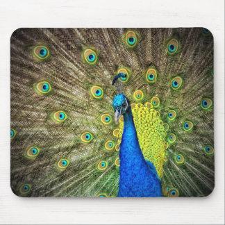 Beautiful Peacock Photo Mouse Mat