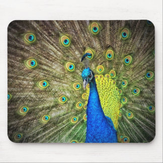 Beautiful Peacock Photo Mouse Pad