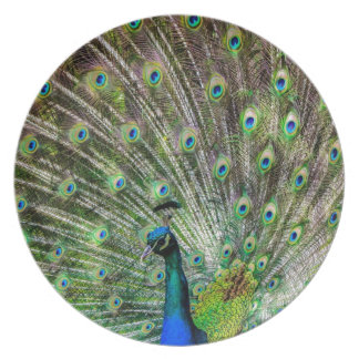 Beautiful Peacock Plate