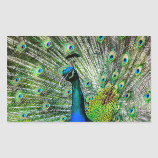 Beautiful Peacock Rectangular Sticker