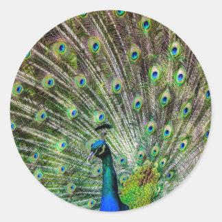 Beautiful Peacock Round Sticker