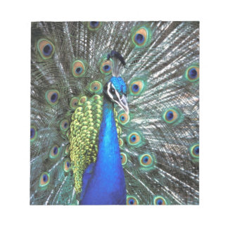 Beautiful peacock spreading colorful feathers notepad
