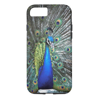 Beautiful peacock spreading colourful feathers iPhone 8/7 case