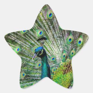 Beautiful Peacock Star Sticker