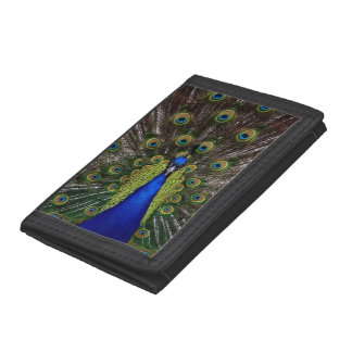 Beautiful Peacock Tri-fold Wallet